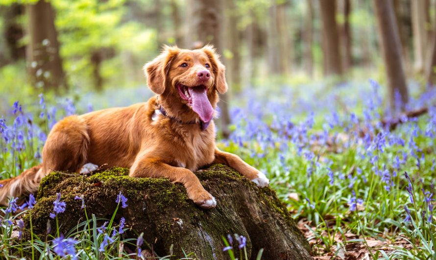 CBD Oil For Dogs Review